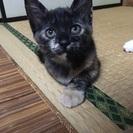 生後2カ月のサビ猫