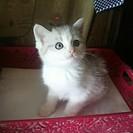 【募集終了】子猫の里親募集 メス猫