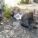 1ヶ月位の子猫3匹の里親さん募集です。