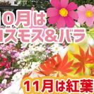 北山♥プチ紅葉がはじまる秋の府立植物園に遊びに行きたい♪