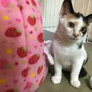 推定2.5〜3ヶ月の三毛猫ちゃん♡