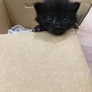 生後2週間の子猫です。(交渉中)