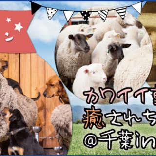 11/5(土)マザー牧場で大自然を満喫★カワイイ動物達にも癒され...