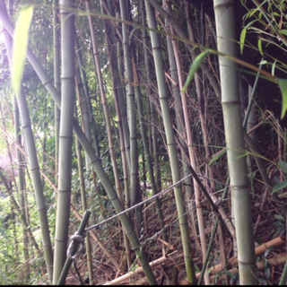 自由研究、DIY、流しそうめんに🎋竹🎍古民家  バンブー家具  竹垣