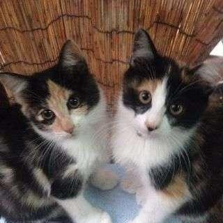 子猫2匹、差し上げます。