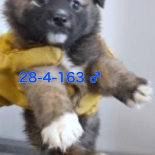 防府市の保健所にいる子犬の家族になってください - 防府市