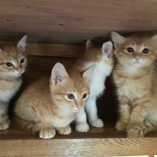 子猫の里親様募集します!