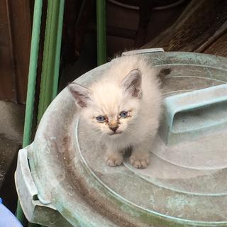野良の子猫です。