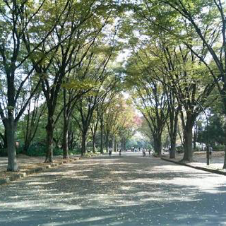 旅ラン@駒沢大学