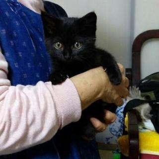 《受付停止中》2カ月半黒子猫♀女の子