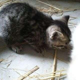 子猫の里親を探してます!野木町です!
