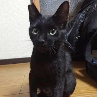 THE☆甘えん坊!地域猫だけど家猫希望のタマの家族を探しています。
