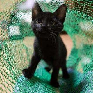 ☆尻尾の長い美人黒猫とお幸せに☆