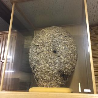 巨大なスズメバチの巣、ケース付き