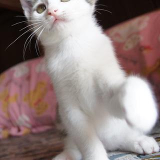 6月末産まれ、人が大好きな男の子です。 - 猫
