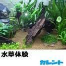 障害のある方が心を込めて造った 水草の販売や水槽レンタル