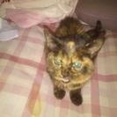 (里親決定しました。)育児放棄されてた子猫
