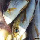 釣りに行って釣ってきた魚どうしてますか❓️技術売ります。