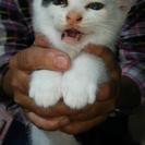 二ヶ月の子猫ちゃん