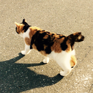 とても人懐こい三毛猫(メス)