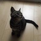 4ヶ月くらいの子猫