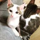 ◎募集停止 保護猫 ミル ★トライアル決定★