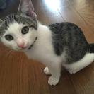 6月末産まれ、人も猫も大好きな男の子です。 − 山形県