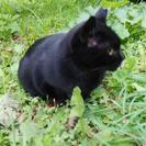 北大農場に捨てられたメスの黒ネコ