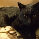 気だての良いオス黒猫です