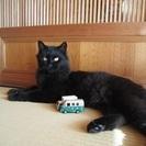 長いふさふさしっぽが自慢の黒猫クロちゃん