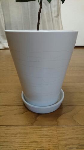 植木鉢に収まるサイズなら、テーブルで果物を収穫することもできます。