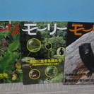 北海道ネイチャーマガジン 「モーリー」3冊セットで(バラ売り可)