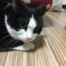 綺麗な毛並みの白黒猫ちゃん!