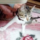 4ヶ月くらいの子猫です♥