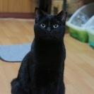 美人の黒猫ちゃん