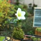 【のにわ】苔玉教室 − 大阪府