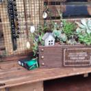 男前な多肉植物の箱庭