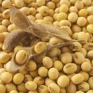 発酵食品を作ろう! 植物性ミネラルたっぷりのお味噌編