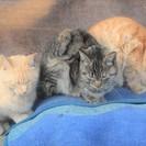 親戚の自宅の傍で野良猫が子猫を産みました