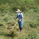 草刈り 植木剪定など。 埼玉県 群馬県 格安