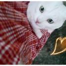とっても甘えん坊な白猫のしろたん