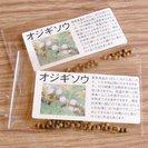 オジギソウの種30粒入り2袋