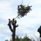お困りの高木・大径木を伐採します。