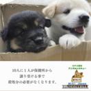 保護犬の 譲渡会 ( 里親 募集 )  犬 保護活動 ボランティア