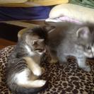 1ヶ月くらいの子猫3匹可愛いです - 国頭郡