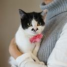 可愛い☆ちいちゃん7か月の仔猫