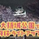 春だ!桜だ!大阪城公園で夜桜&ライトアップデート♪