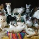 羊毛フェルトで愛犬愛猫のぬいぐるみを作りませんか? (旧軽井沢)初...