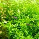 熱帯魚数種とエビを引き取ってくださる方お願い致します。
