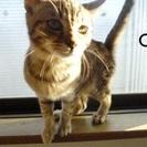 【保護猫】猫ちゃんたちの里親募集【元野良】